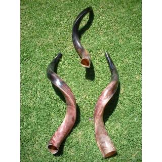 Polished Kudu Horn