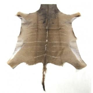 African Greater Kudu Skin Size: 5.7 X 5 ft Antelope Rug Buck Skin Kudu Skin
