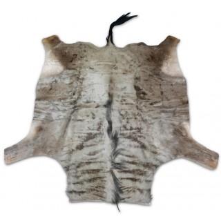 Wildebeest African Antelope Skin